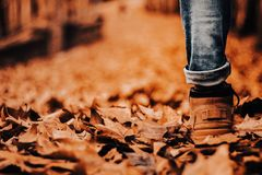 Boot on a path of leaves, autumn royalty free stock images