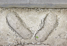Boot prints in the hardened concrete. As a background royalty free stock photo