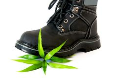 Boot and sprout Stock Image
