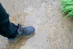 Boot stepping in the mud Stock Photo