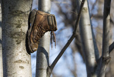 Boot on tree Royalty Free Stock Photos