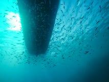 Boot van Onderwater met binnen school van Kleine Vissen in het Rode Overzees royalty-vrije stock afbeelding