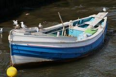 Boot van Zeemeeuwen. Stock Foto