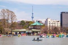 Boote auf Shinobazu-Teich an Ueno-Park lizenzfreies stockbild