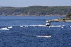 Boote in den Bergy Bits in der Gans-Bucht stockbilder