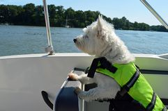 Bootfahrt-Hund lizenzfreie stockfotos