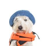 Bootfahrt-Hund Lizenzfreies Stockfoto