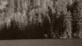 Bootfahrt unter Holz und Bergen stock video