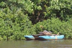 Bootmeertros op de rivierbank Royalty-vrije Stock Foto