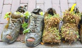 Boots цветочные горшки Стоковые Фото