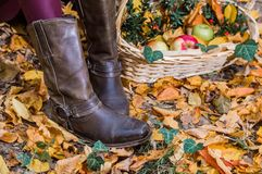 boots and apples royalty free stock images