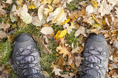 Boots in autumn leaves Stock Image