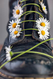 Boots with Daisy Flowers Royalty Free Stock Image