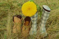 Boots on field grass sunflower a couple Royalty Free Stock Image