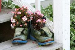 Boots full of flowers. Old work boots filled with waxed begonias stock photos