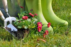 Boots for gardening Stock Image