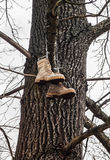 Vagabond's boots hanging on a tree stock photo