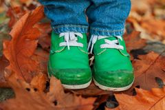 Boots and leaves Stock Photography