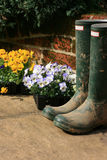 Boots and Pansies. A pair of muddy wellington boots on a stone patio with a bricked wall to the background. Pots of pansys set next to boots awaiting planting stock photo