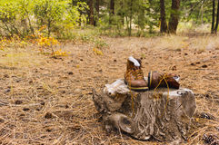 Boots sitting on stump in the forest Royalty Free Stock Photo