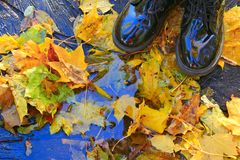 Boots on yellow autumnal leaves and pool. Rainy weather