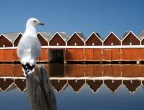 Bootshäuser reflektiert im Wasser lizenzfreie stockfotos
