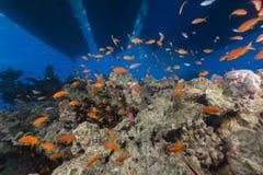 Bootsilhouetten en het aquatische leven in het Rode Overzees stock afbeeldingen