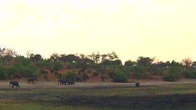 Bootskreuzfahrt und Safari der wild lebenden Tiere auf Chobe-Fluss, Namibia Botswana Grenze, Afrika stock video