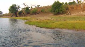 Bootskreuzfahrt und Safari der wild lebenden Tiere auf Chobe-Fluss, Namibia Botswana Grenze, Afrika stock footage