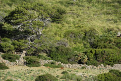 The Boquer Valley, Majorca, Spain. The wild Mallorcan goats in the Boquer Valley, Majorca, Spain Royalty Free Stock Photo