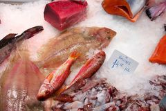 Boqueria fish. Boqueria market in Barcelona. Fresh fish price tags: tuna, salmon, squids and four-spot megrim flatfish Stock Photos