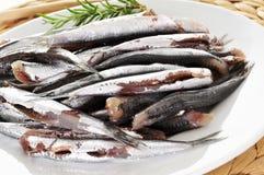Boquerones espagnols crus, anchois typiques en Espagne Images stock