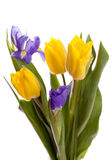 Boquet of beautiful yellow tulips and irises. Bunch of beautiful yellow tulips and irises on white background Royalty Free Stock Image