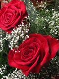Boquet de rosas Fotos de archivo libres de regalías