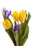 Boquet der schönen gelben Tulpen und der Blenden Lizenzfreies Stockbild