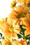 Boquet of orange flowers Stock Photo