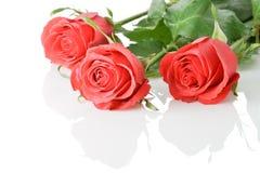 Boquet rojo de tres rosas Foto de archivo