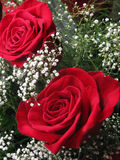 Boquet of Roses. What says I love you like a big, beautiful boquet of bright, red roses Royalty Free Stock Photos