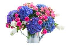 Boquet von weißen Tulpen, von rosa Rosen und von blauem Hortensia blüht Stockbild