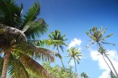 Bora Bora ö Royaltyfria Bilder