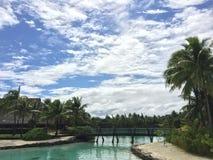 Bora bora绿色棕榈树 免版税库存照片