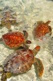 Bora Bora franska Polynesien Arkivbilder