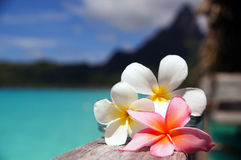 Bora Bora Getaway Stock Photography