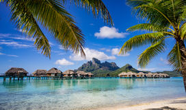 Bora Bora inramade vid palmträd Royaltyfri Foto
