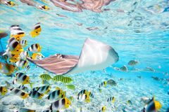 Bora Bora subacuático foto de archivo libre de regalías