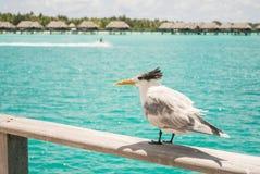 Bora Bora Tahiti overwater bungalow Royalty Free Stock Photography