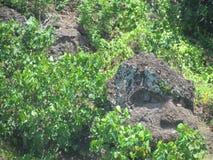 Bora Bora - Felsen-Affe-Gesicht Lizenzfreie Stockfotos