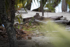 Bora morto di bora della spiaggia delle palme sopra i bungalow del overwater dell'acqua Immagine Stock