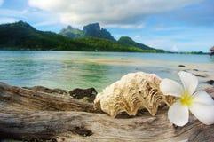 Bora Bora, snäckskal och blomma med bergbakgrund arkivbild