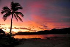 Bora Bora Sunset. Silhouetted Palm tree on the beach with magnificently colored sunset in the background royalty free stock image